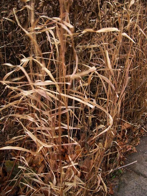 Grassribbons3
