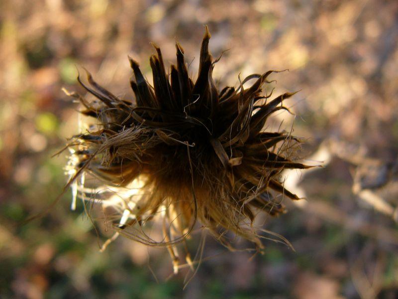 Wintergrass3
