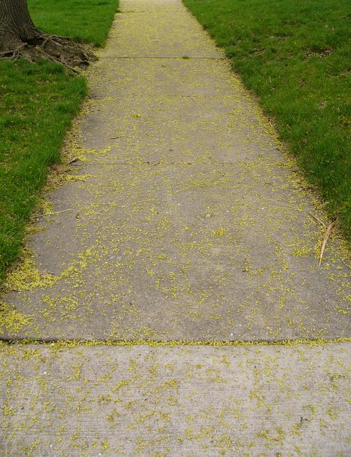 Seedsidewalk