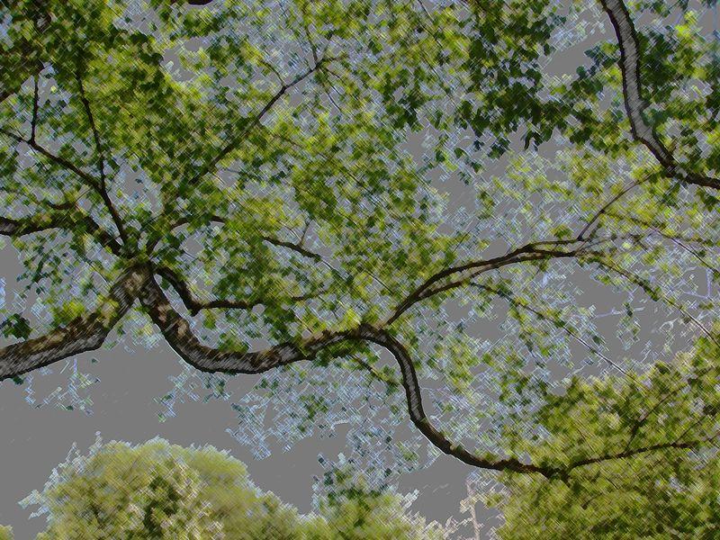Treeundulate