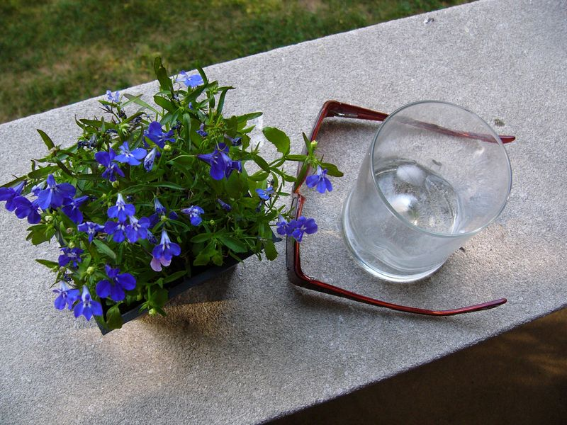 Glass,flowers