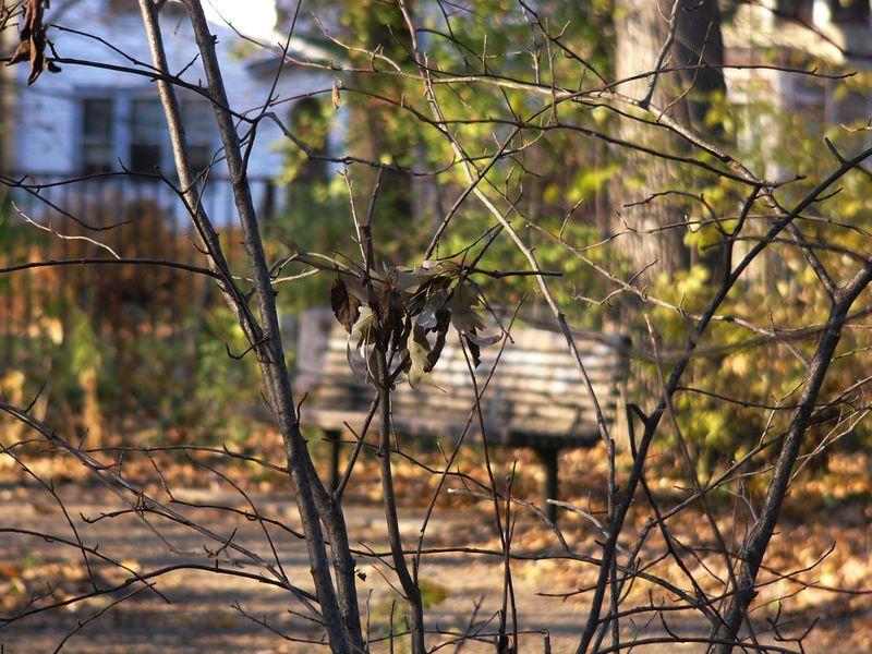 Bench,austinpark