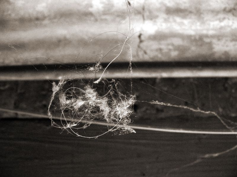 Spiderweb copy