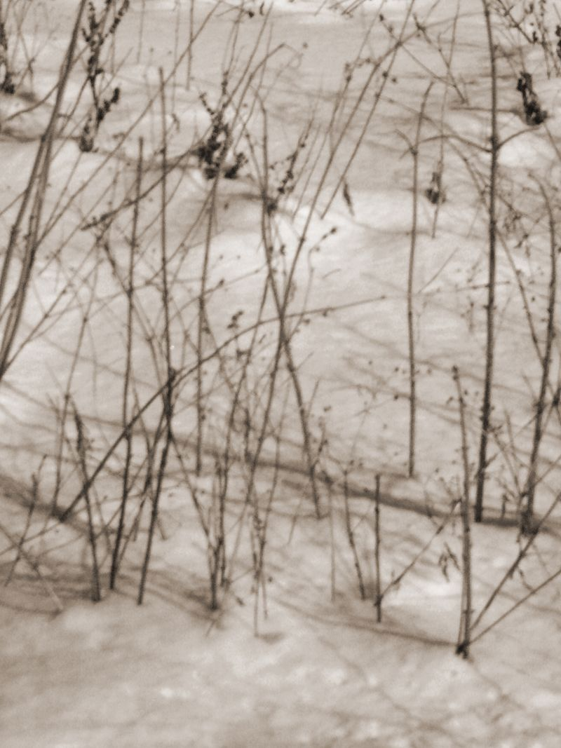 Winterbranches copy