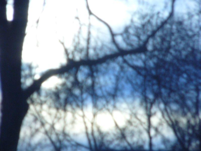 Treescreen