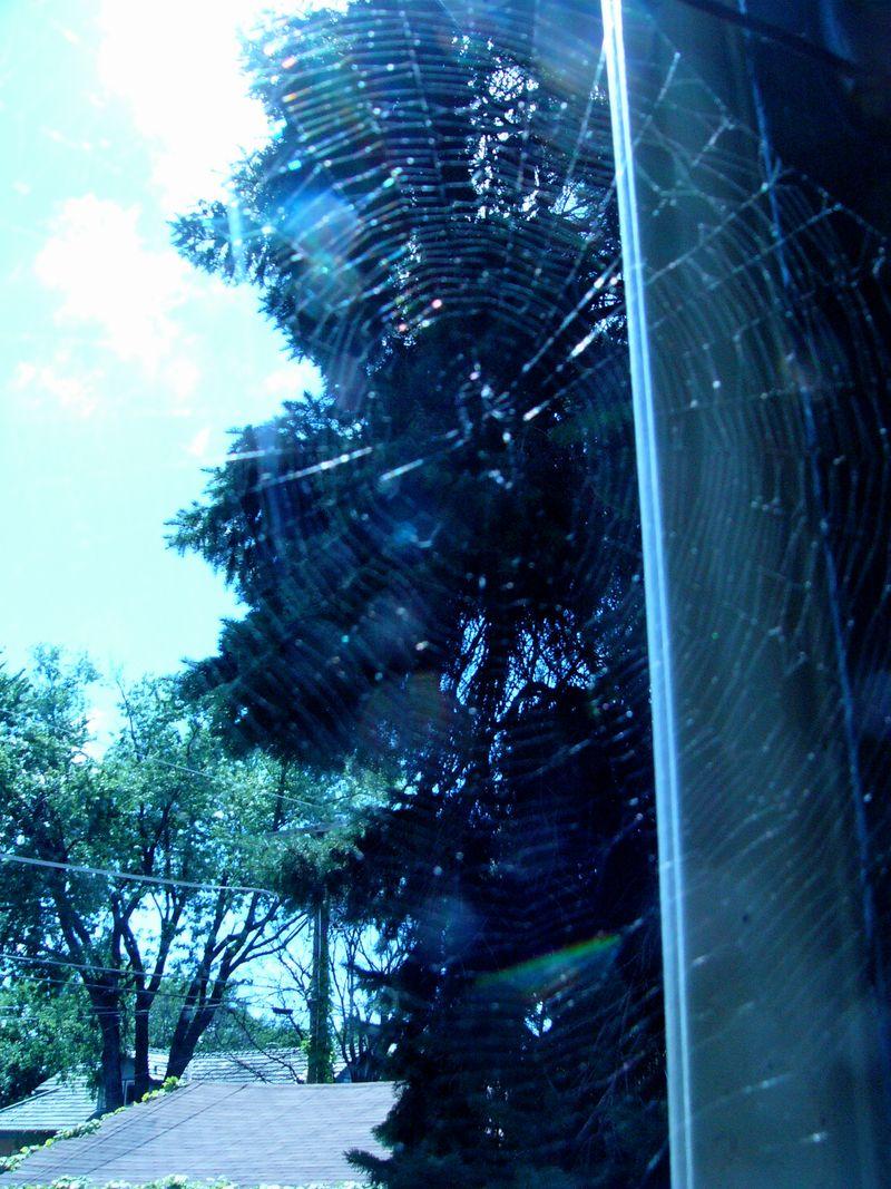 Spiderweb copy