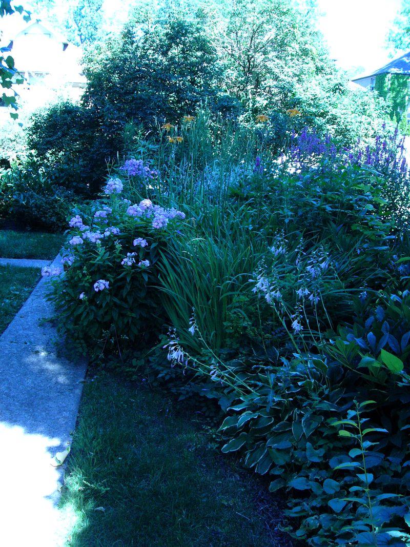 July'sflowers copy