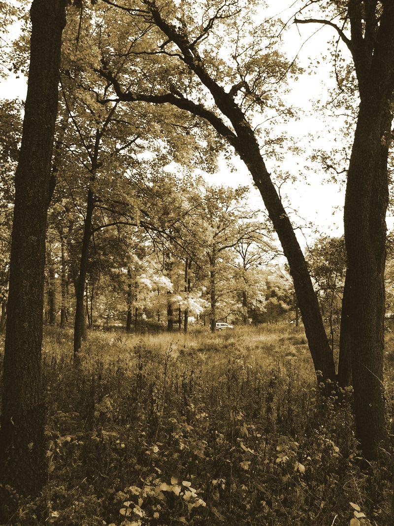 Prairiewoods copy