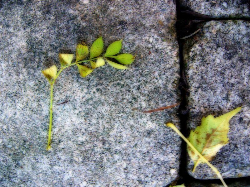 Patio,leaf