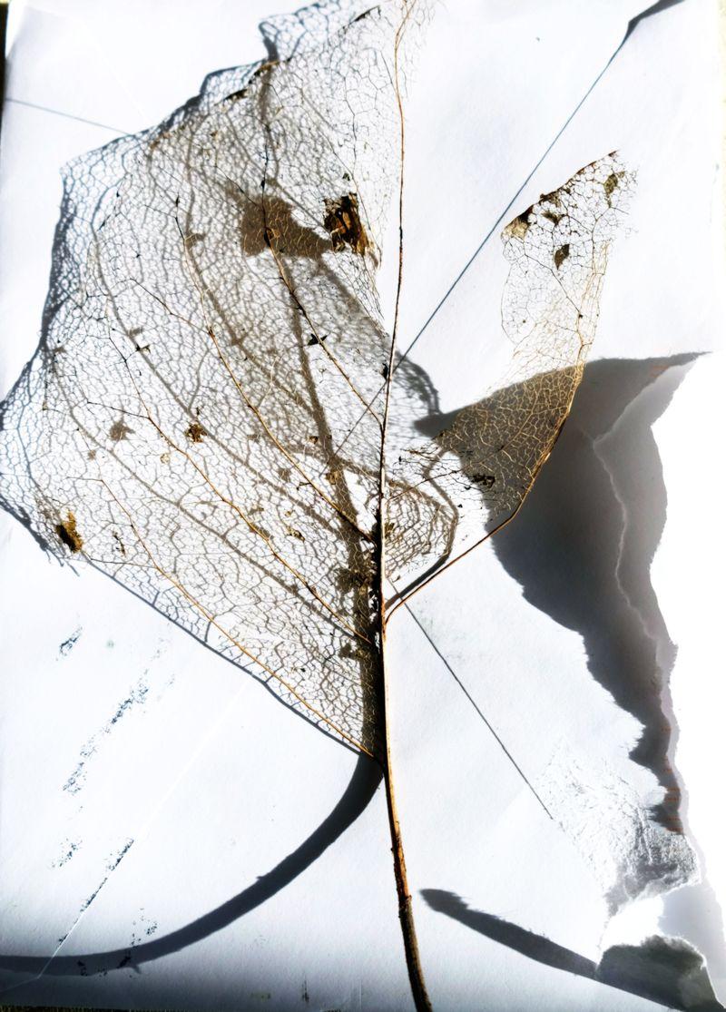 Leaffilligre1