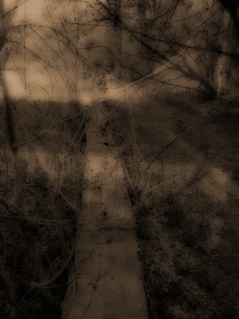 Deergrovewallortonsepia