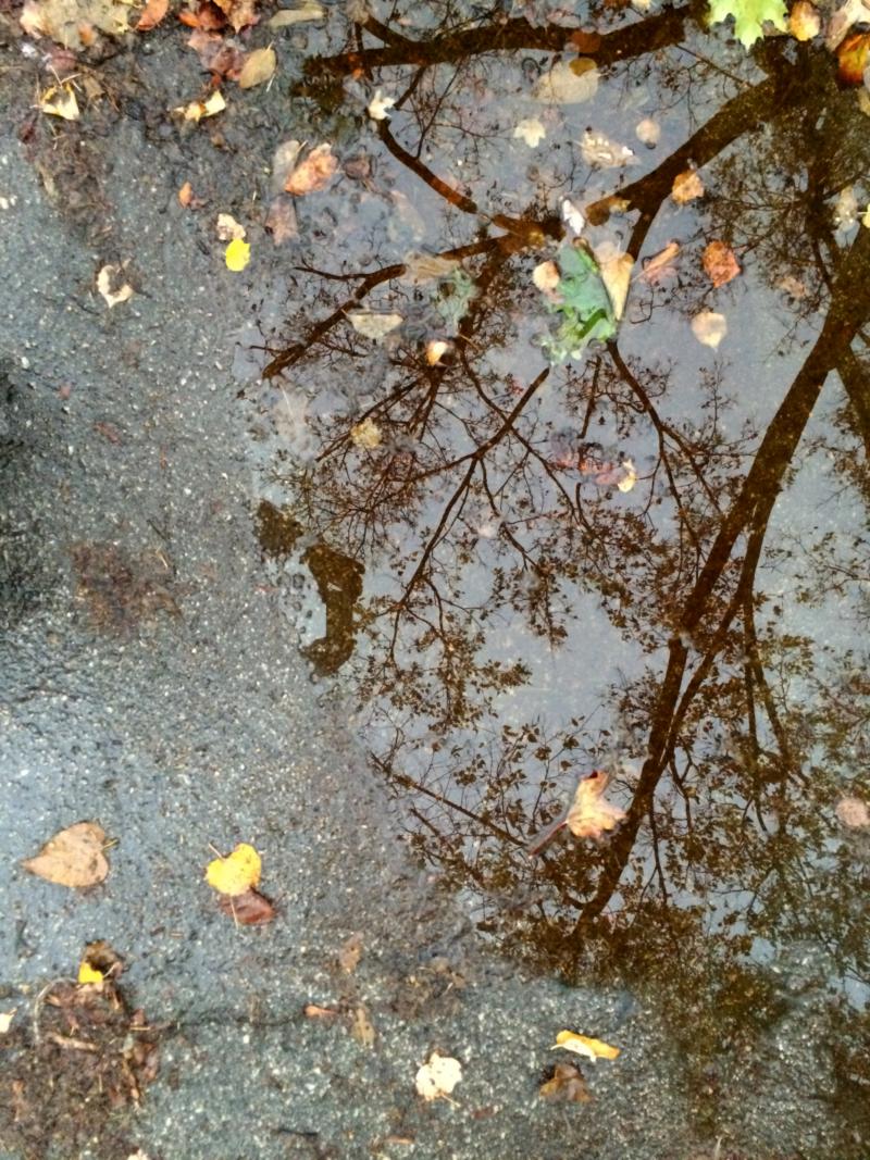 Treeinrainpuddle