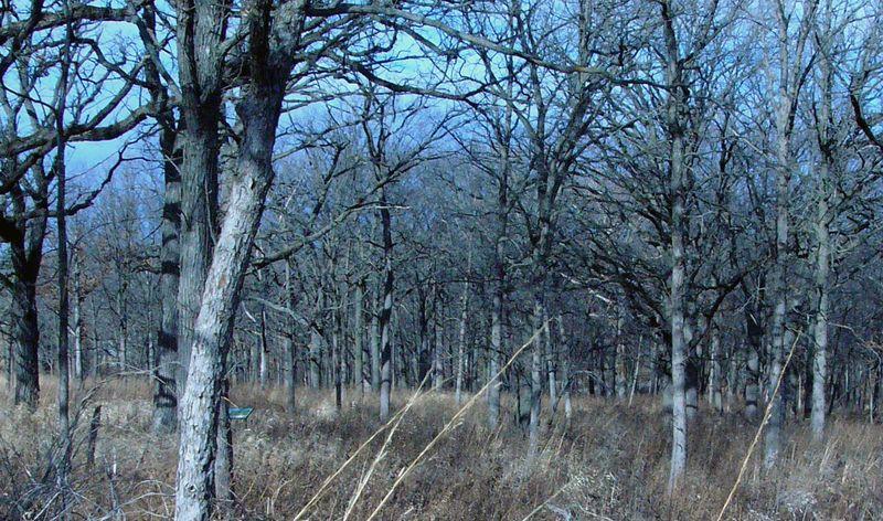 Prairietrees copy