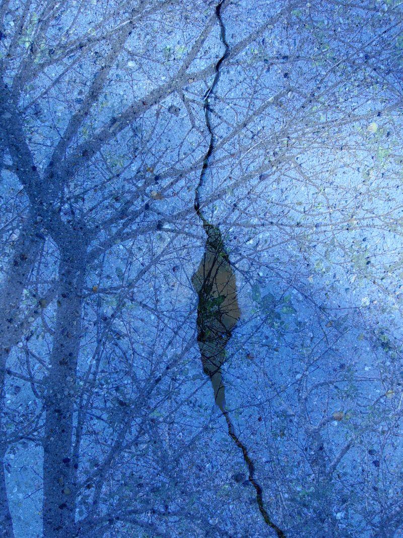 Mosswtree copy