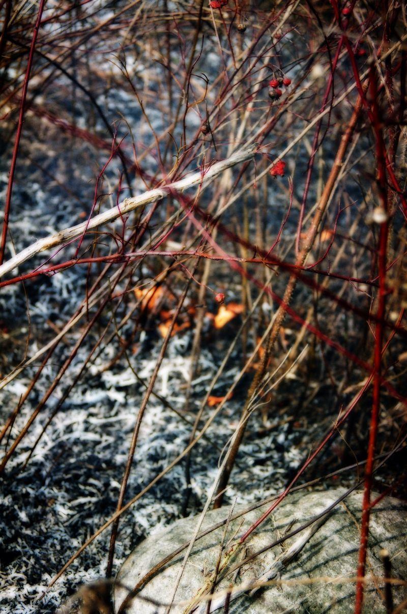 Burn series copy