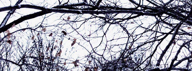 Treewindowcrop copy
