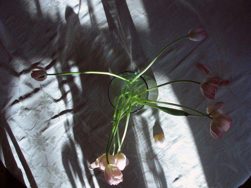 Tulipsfromabove2