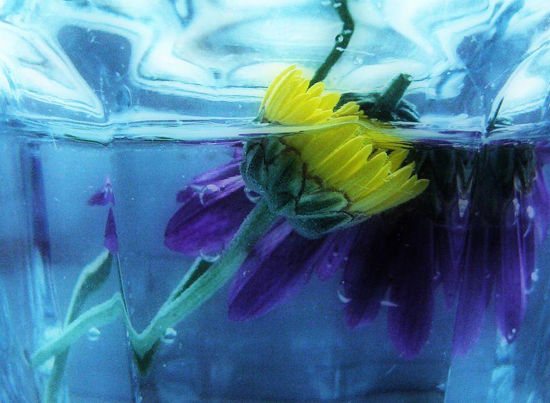 Flowersinwater_edited-1 copy