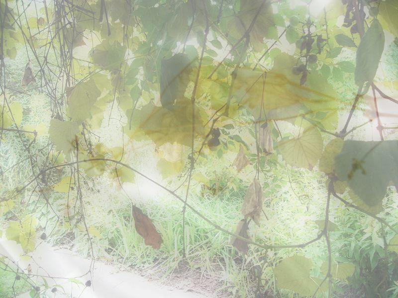 Autumnblurgrapevine
