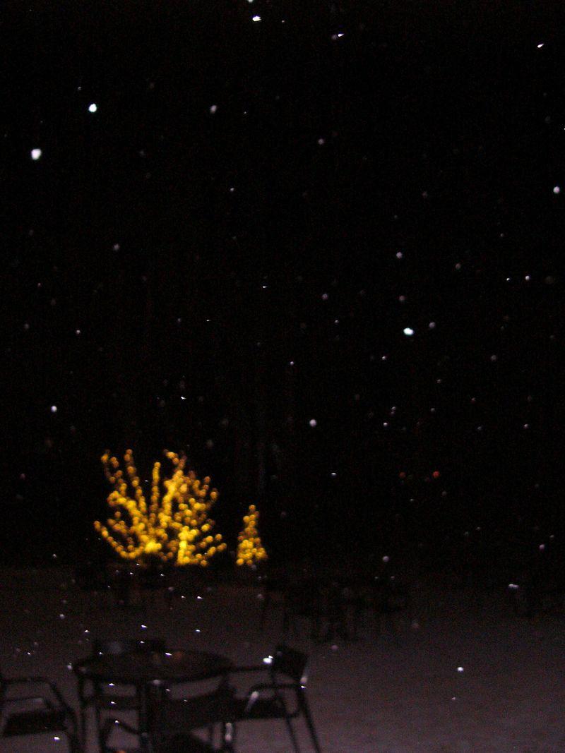Illuminationsarboretum